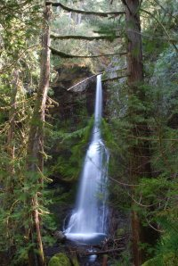 Marymere Falls in the Olympic National Park.